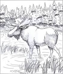 Small Picture 240 best Color Animals images on Pinterest Coloring books