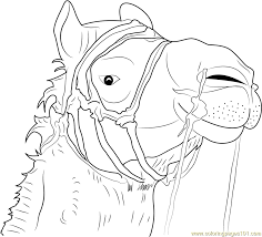 Small Picture Camel Face Coloring Page Free Camel Coloring Pages