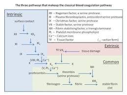 Coagulation Of Blood Flow Chart How Blood Clots Platelets And The Coagulation Cascade