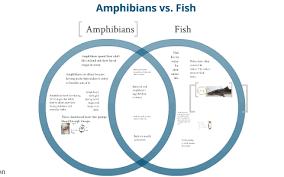 Difference Between Amphibians And Reptiles Venn Diagram Amphibian Diagram Catalogue Of Schemas