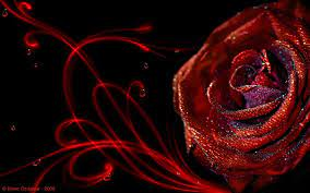 3D Rose Wallpaper kostenloser Download ...