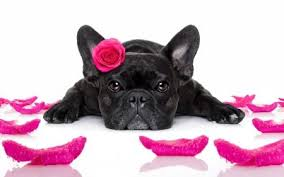 cute animal valentines day wallpaper. Simple Valentines Happy Valentineu0027s Day  Rose Petals Black Pink Cute Animal Intended Cute Animal Valentines Day Wallpaper