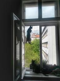 Katzengitter Einfach Katzensicher Cats Dogs Fensterschutz