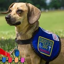 Service Dog Vest Size Chart Medium Sized Dogs Service Dog Vest Official Vest For Your Small Dog