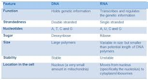 Functions Of Nucleic Acids Nucleic Acids Dna And Rna A Level Biology Revision Notes