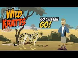 pbs kids games wild kratts go cheetah go cartoon kids game