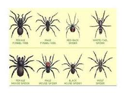 Spider Identification Chart California Pin On Love Them Spiders