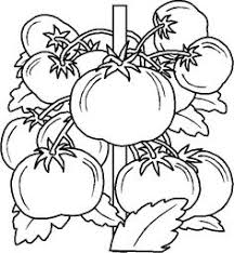 Small Picture Vegetable Coloring Pages Garden vegetables Thanksgiving Dinner