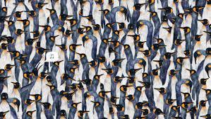 penguins wallpaper tumblr. Perfect Penguins Itu0027s Raining Penguins On Wallpaper Tumblr E