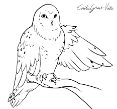 Small Picture adult snowy owl coloring page snowy owl coloring sheet snowy owl