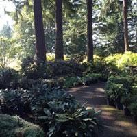 bonsai gardens. Photo Taken At Weyerhaeuser Rhododendron And Bonsai Gardens By Susan P. On 9/13