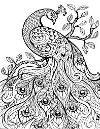 Animal Coloring Pages For Adults Peacock Coloringstar
