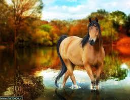 نتیجه تصویری برای تصویر زیبای اسب ها
