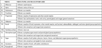 Image Result For Cranial Nerve Innervation Chart Parotid