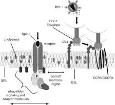 lipid rafts and their function in the