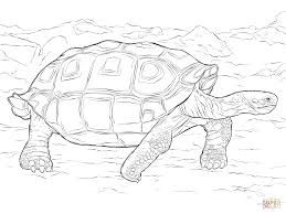 Small Picture Realistic Galapagos Tortoise coloring page Free Printable