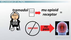 Tramadol Mechanism Of Action Pharmacokinetics