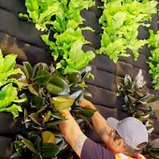 Small Picture Its a whole new way to think about gardening Grow a living wall
