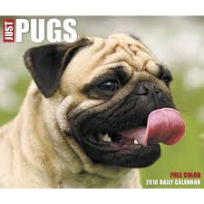 just pugs 2018 desk calendar calendars books gifts