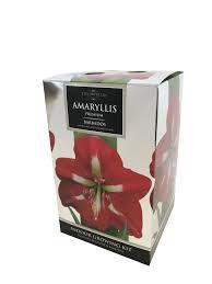 amaryllis bulb barbados flowers gift pack