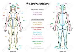 Meridian System Chart Female Body With Principal And Centerline