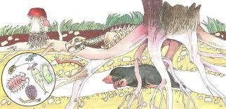 Что такое почва Плодородие Биология Реферат доклад сообщение  Почвенный профиль