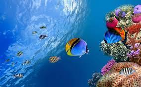 Underwater Desktop Backgrounds ...