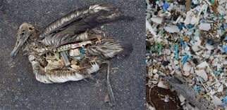 ban the plastic bag earthfirst is your green guide directory for victims of the gyre