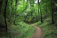 Image result for جنگل مازندران