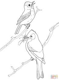 Flycatcher coloring pages