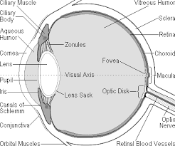 macular degeneration is a painless eye disease ociated with ageing that causes progressive loss of detailed central vision