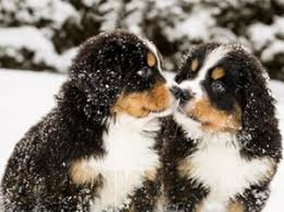 Είναι σοβαρή η γρίπη στο σκύλο;