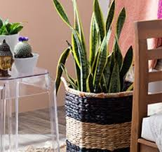 floor plants and succulents boho chic furniture