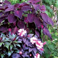 7 Great Container Plants For Shady SpotsContainer Garden Ideas For Shade