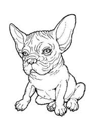 bulldog puppy drawing. Modren Puppy Black And White Line Drawing Plump French Bulldog Puppy From A Series Of  Images Inside Bulldog Puppy Drawing B