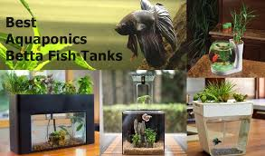 beautiful self cleaning aquaponics tanks with plants on top for betta fish