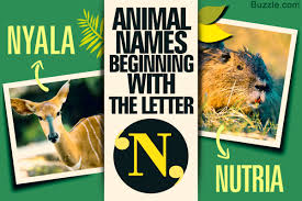 1200 animals whose names begin with letter n