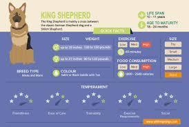 King Shepherd The King Of German Shepherds All Things Dogs