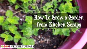 Plants For Kitchen Garden How To Grow A Vegetable Garden From Kitchen Scraps Youtube