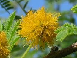 Árvores Nativas - Mudas Frutabella