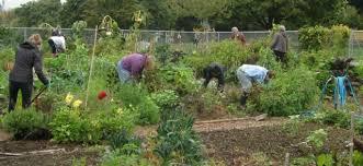 community gardening. Exellent Gardening Frazer Community Garden And Gardening G