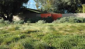 Small Picture California Drought Resistant Grass california native garden