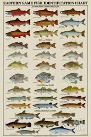 Freshwater Fish Identification Chart Eastern Gamefish Identification Chart Art Print Landens