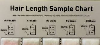 Hair Length Sample Chart Shave Blade Sample Chart Kreations By Kohler Llc