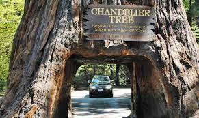 chandelier drive thru tree park leggett ca california beaches