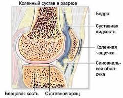 Курсовая работа Классический массаж как метод физической  Рис 1 1 Анатомия коленного сустава в норме