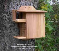 flying squirrel houses plans best of 107 best squirrels images on of flying squirrel houses