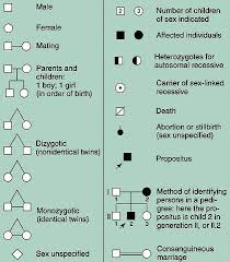 Genetic Pedigree Chart Symbols Mlab 2378 Fundamentals Of Molecular Diagnostics