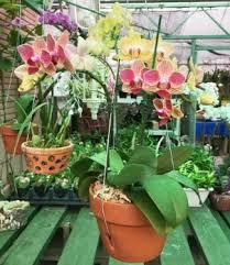 8 Best Fertilizer For Orchids 2019 Reviews Guide