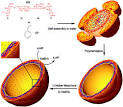 nanocapsules